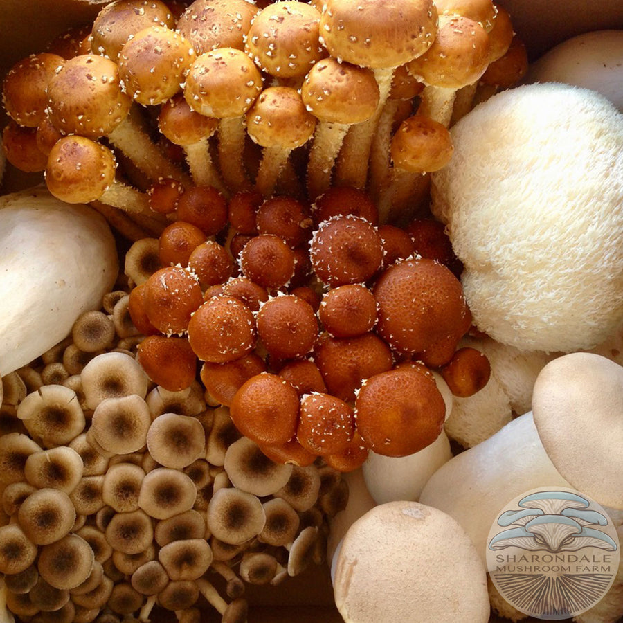 Farmer's Choice Specialty Mushrooms