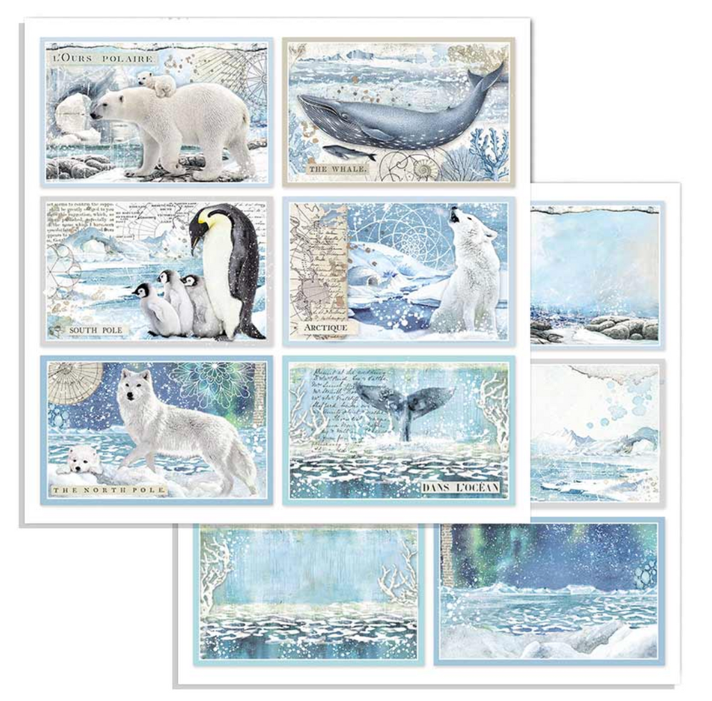 Arctic Antarctic Paper Bundle Stamperia