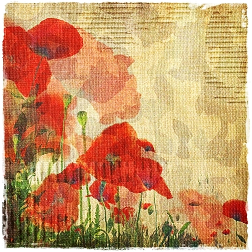 Vintage Poppies by Sally Butler