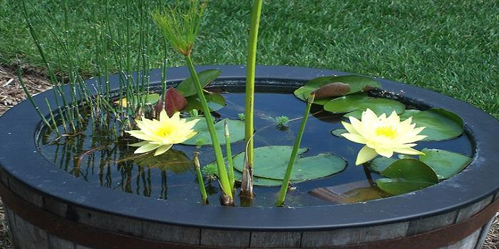Planting a Water Garden: Choosing Plants and Proper Maintenance