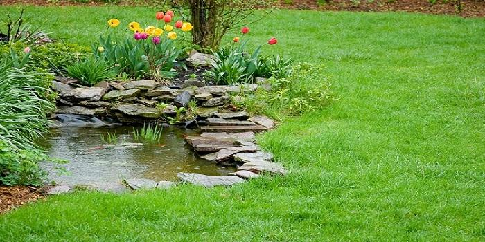 Question and Answers: Eco-friendly and Safe Products to Use in Your Pond