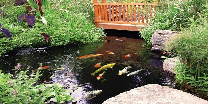 6 Large Koi Ponds Maintenance Tips