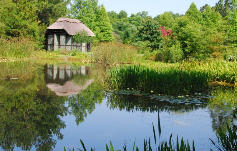 Things to Know About Pond Water Management