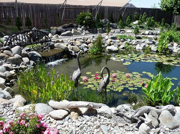 Optional Additions to Your Pond