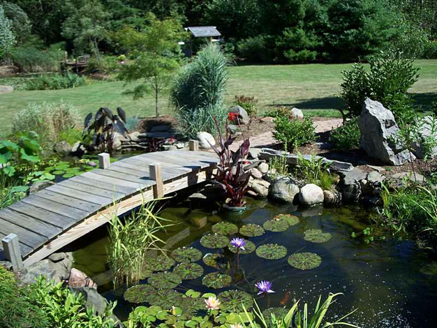 What You Need for Pond Installation