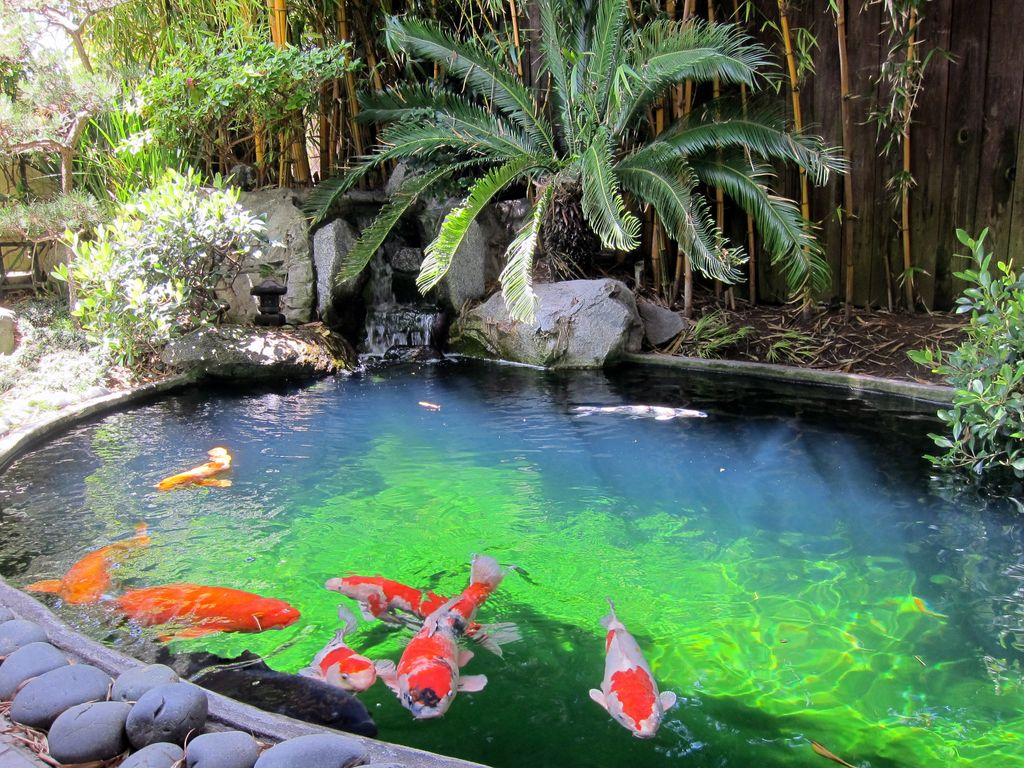 FAQ & Answers for Building a Koi Pond – Part 2