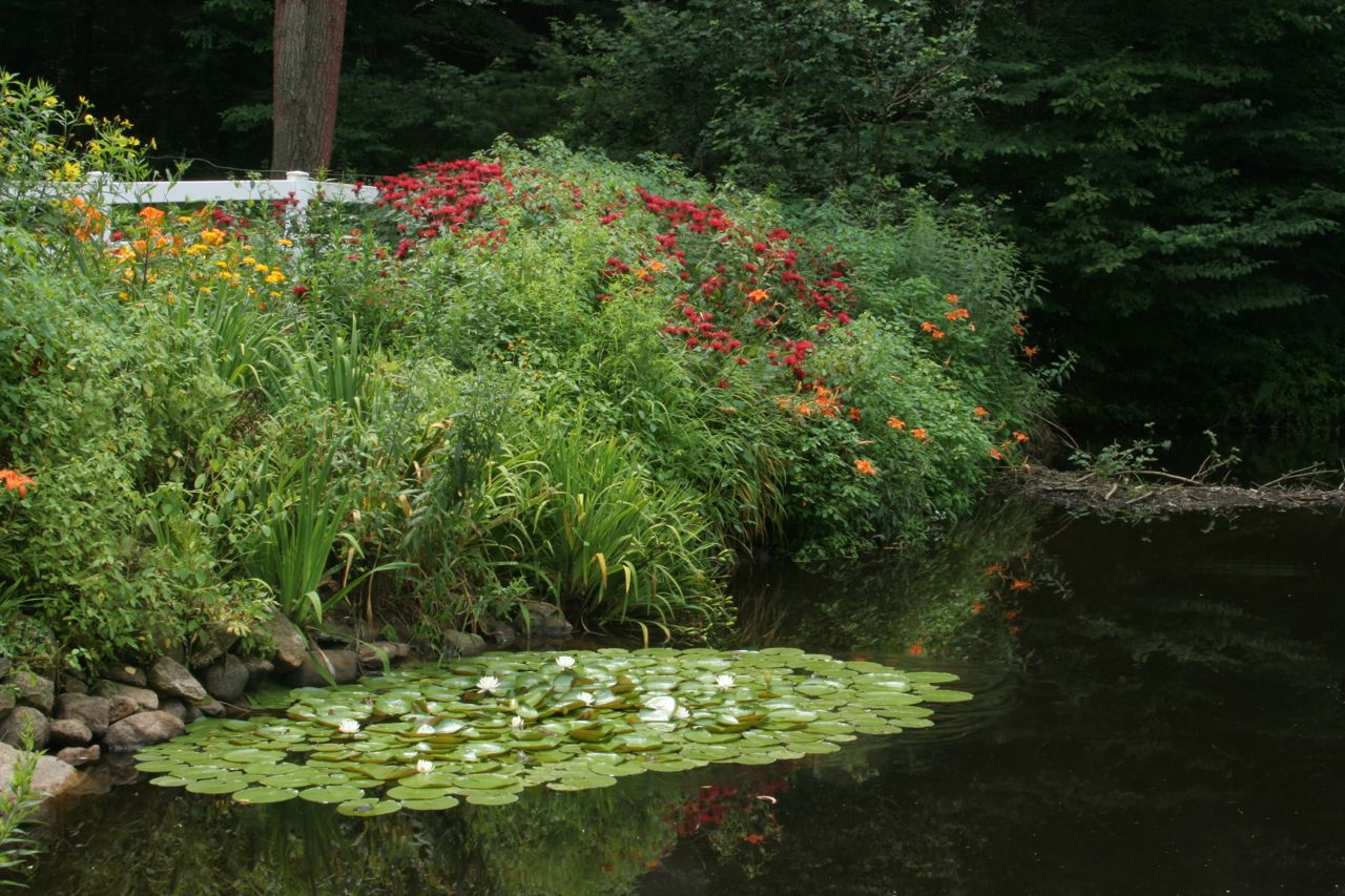 Different Type of Aquatic Plants on Your Farm Pond
