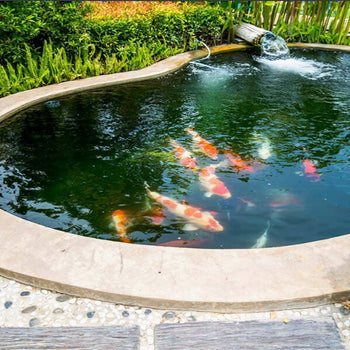 Create and Maintain a Healthy Pond Ecosystem