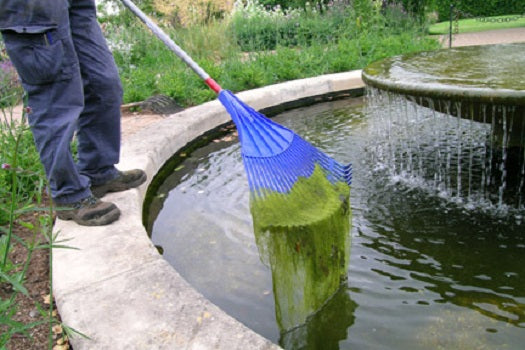 Summer Maintenance For Ponds – 7 Tips
