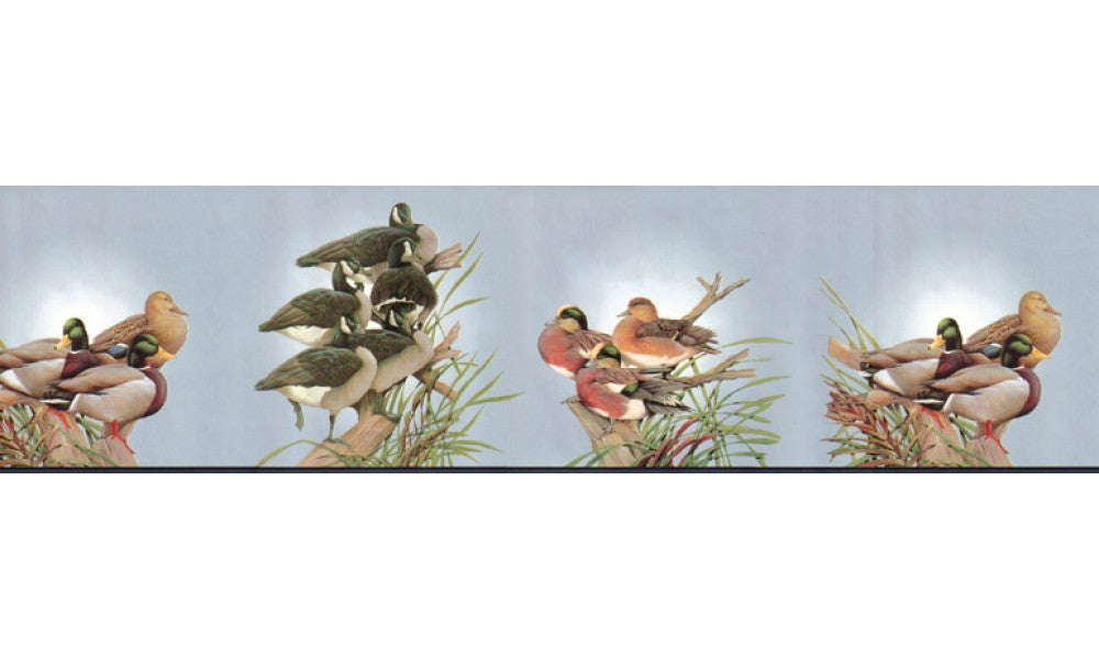 Birds B2061DU Wallpaper Border
