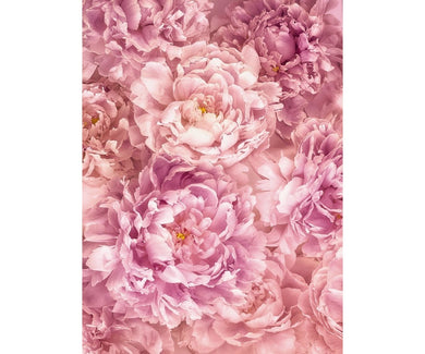 Soave Blossom XXL2-009 Wall Mural