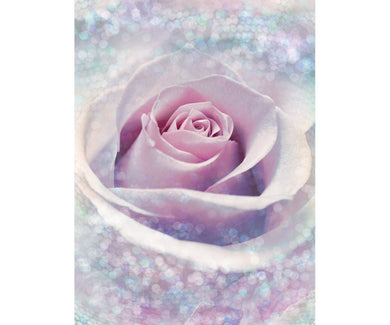 Delicate Rose XXL2-020 Wall Mural