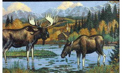 Black Moose WL5607 Wallpaper Border