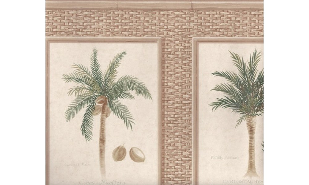 Brown Bamboo Palm Trees TK6245 Wallpaper Border