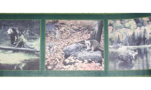 Dark Green Framed Animal Photos CW102785 Wallpaper Border