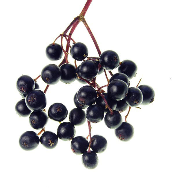 Elderberry Skin Benefits
