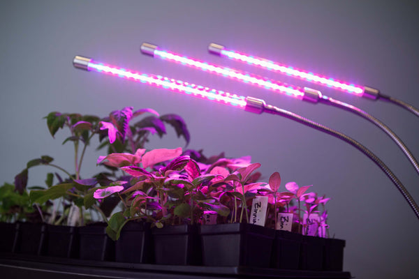 Starting seedlings indoor using LED grow lamps