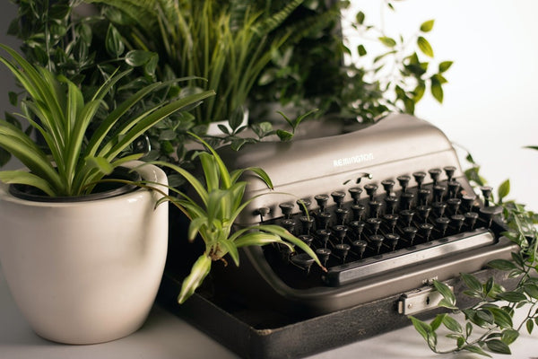 Spider plant in a white pot with a silver typewriter