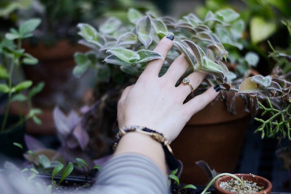 Woman's hand touching plants lovingly