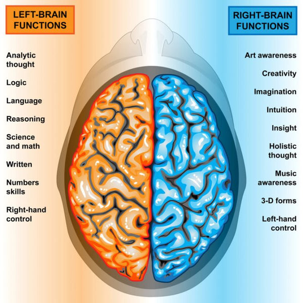Left Right Brain Function