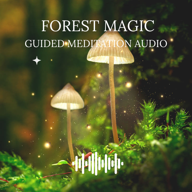 Forest Magic Guided Meditation Audio