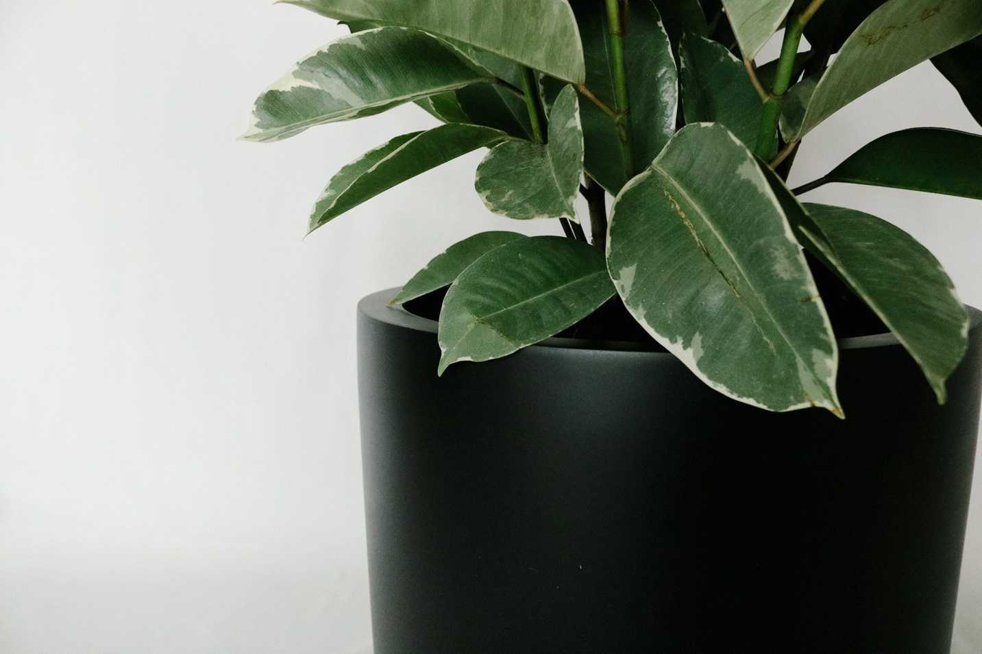Black Low Cylinder Planter Planters Hudson + Oak