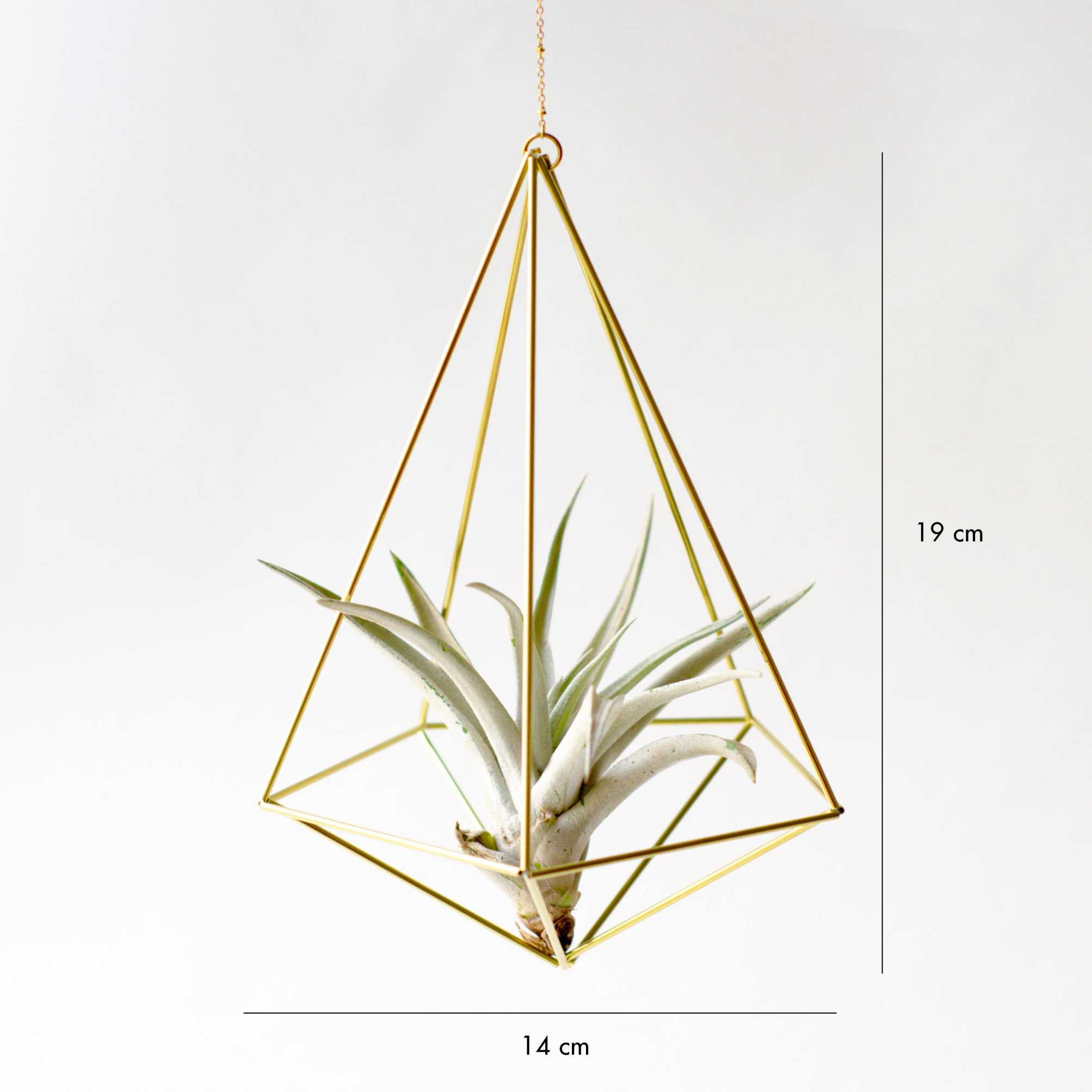 Brass Air plant Holder - Himmeli Decahedron No.02 Himmeli Fuxigold