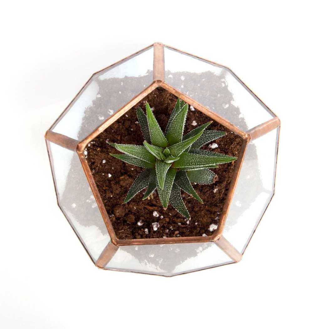 Clear & Rainbow Glass Dodecahedron // Small Geometric Terrarium
