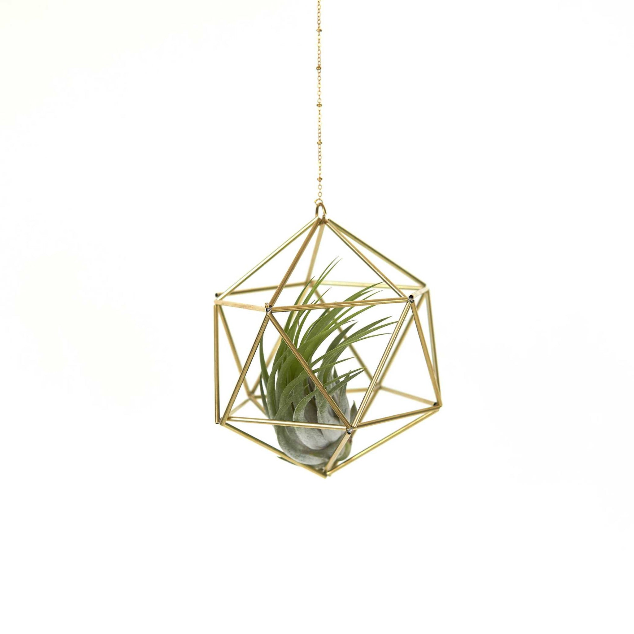 Gold Air plant Holder — Icosahedron Himmeli (with chain) Himmeli Fuxigold Default Title