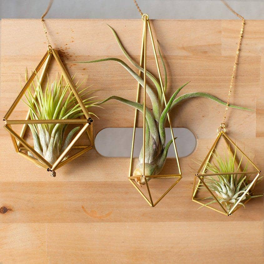 Hanging Geometric Air Plant Holder — Hexahedron Himmeli 02 Himmeli Fuxigold