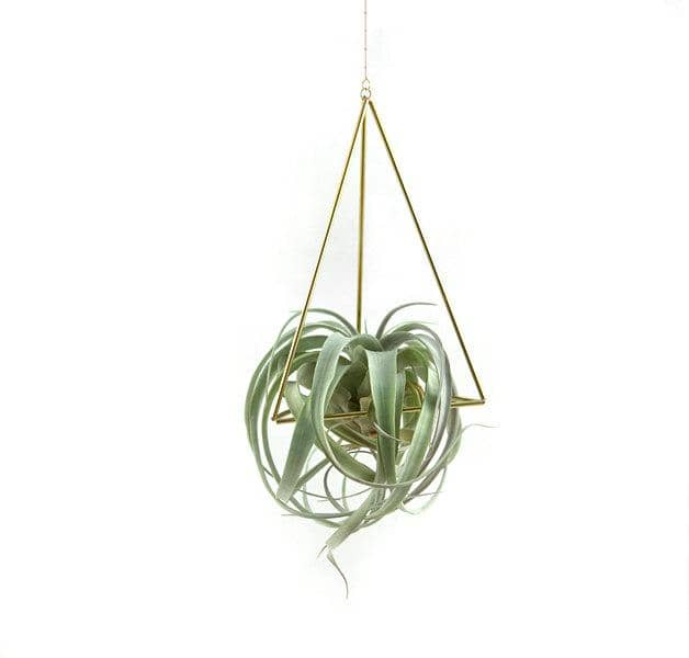 Hanging Geometric Air Plant Holder - Tetrahedron Himmeli No.01 Himmeli Fuxigold