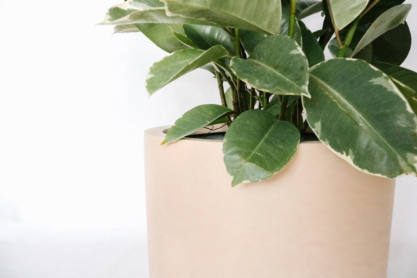 Matte Blush Lightweight Pot Planters Hudson + Oak