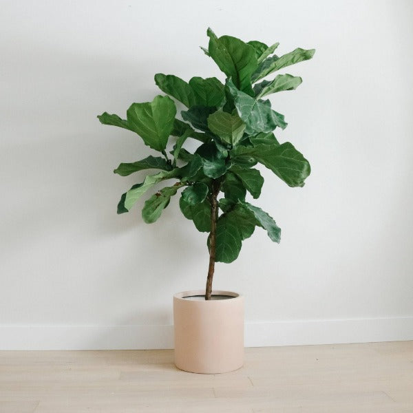 Matte Blush Planter - Lightweight Pot Planters Hudson + Oak SML 8L x 8W x 8H inches Matte Black Indoor (no drainage holes)