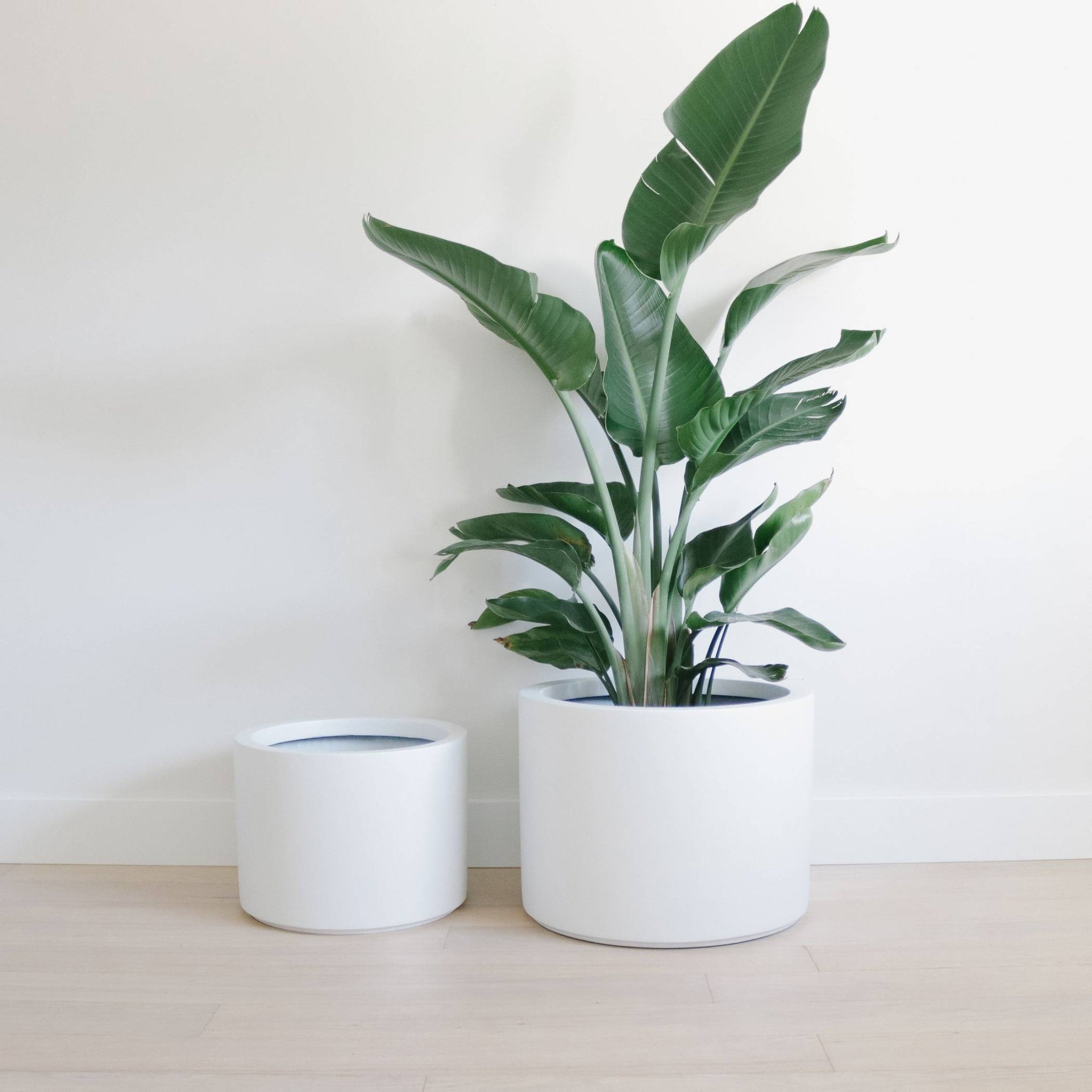 Modern Matte Planter - Low Cylinder Pot Planters Hudson + Oak MED 14Lx14Wx10.5H inches Matte White Indoor (no drainage holes)