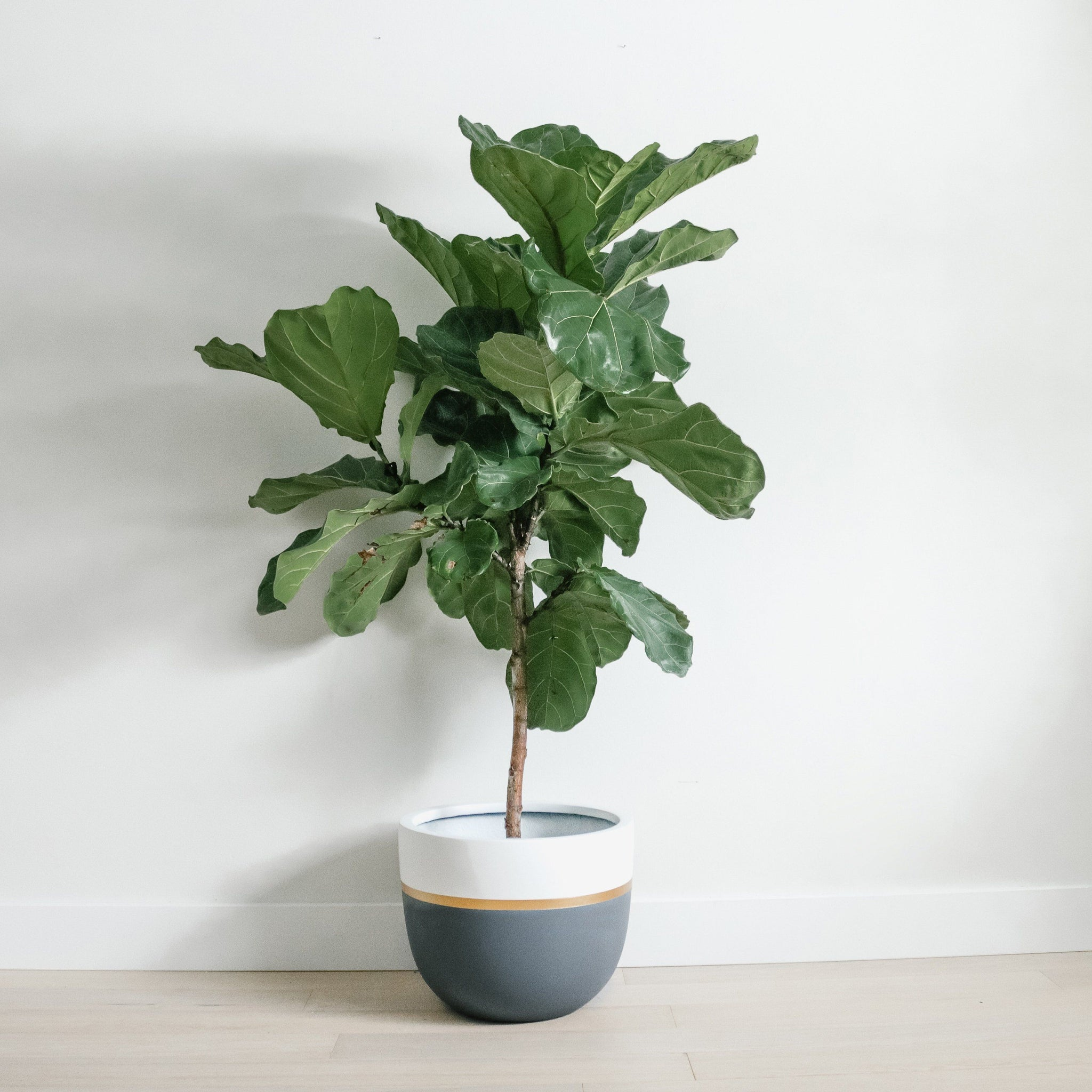 'queen b' - Grey White + Gold Planter Planters Hudson + Oak SML 11L x 11W x9H inches Indoor (no drainage holes)