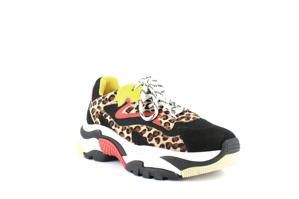 Yieldings Discount Shoes Store's Addict Low-Top Sneakers by Ash in Beige/Black/Multi