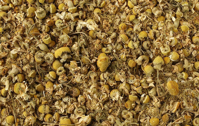 Organic Egyptian Camomile Flower 2oz