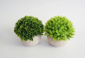 TOPIARY MINI POTS - Set of 2