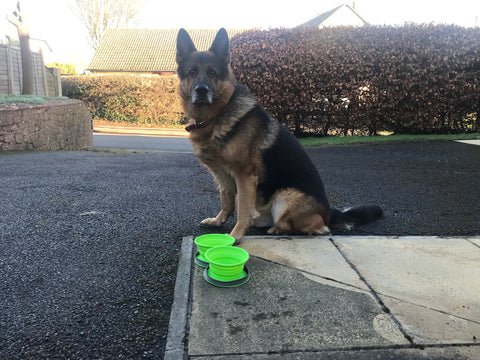 Collapsible Dog Bowls and Portable Dog Water Bottle - Combo Set