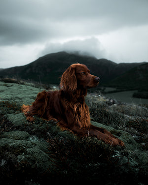 Troja Green Preset Pack