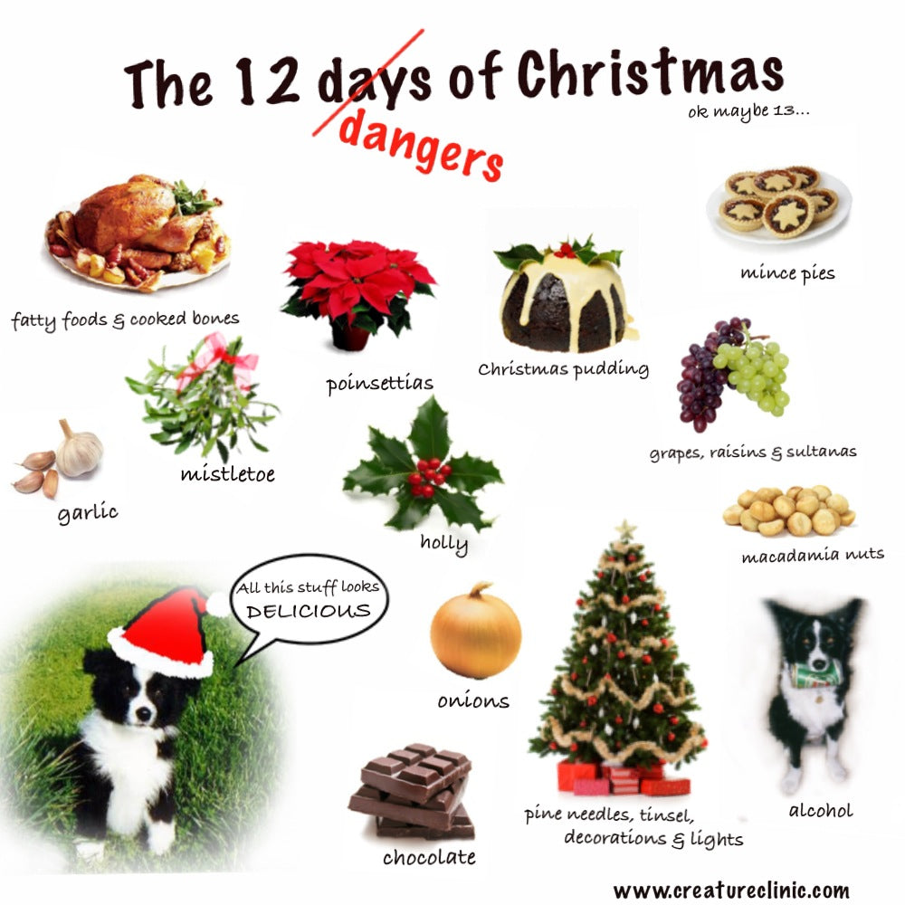 Christmas Hazards for Dogs & Cats