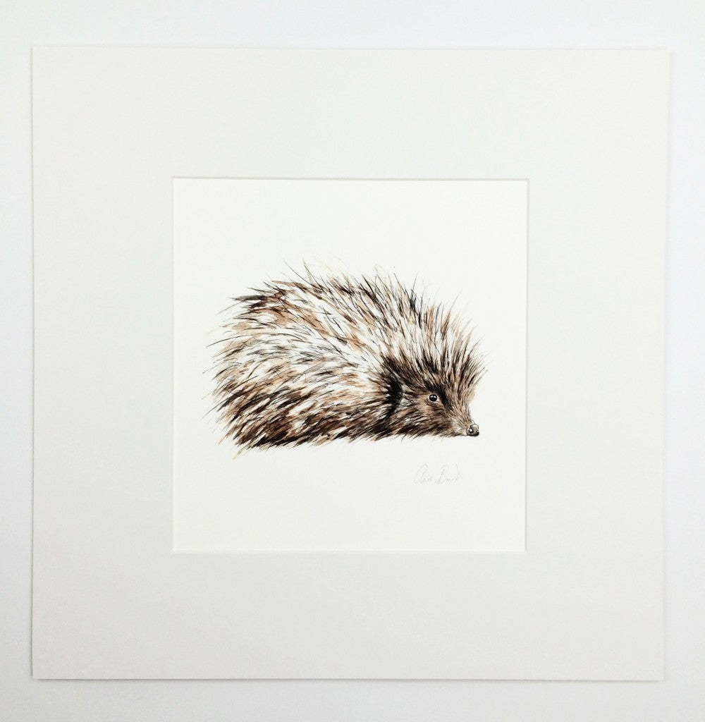 Hedgehog Art Print | Clare Baird