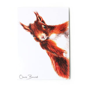 Red Squirrel Magnet