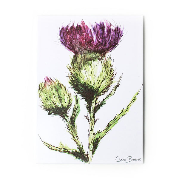 scottish thistle flower magnet