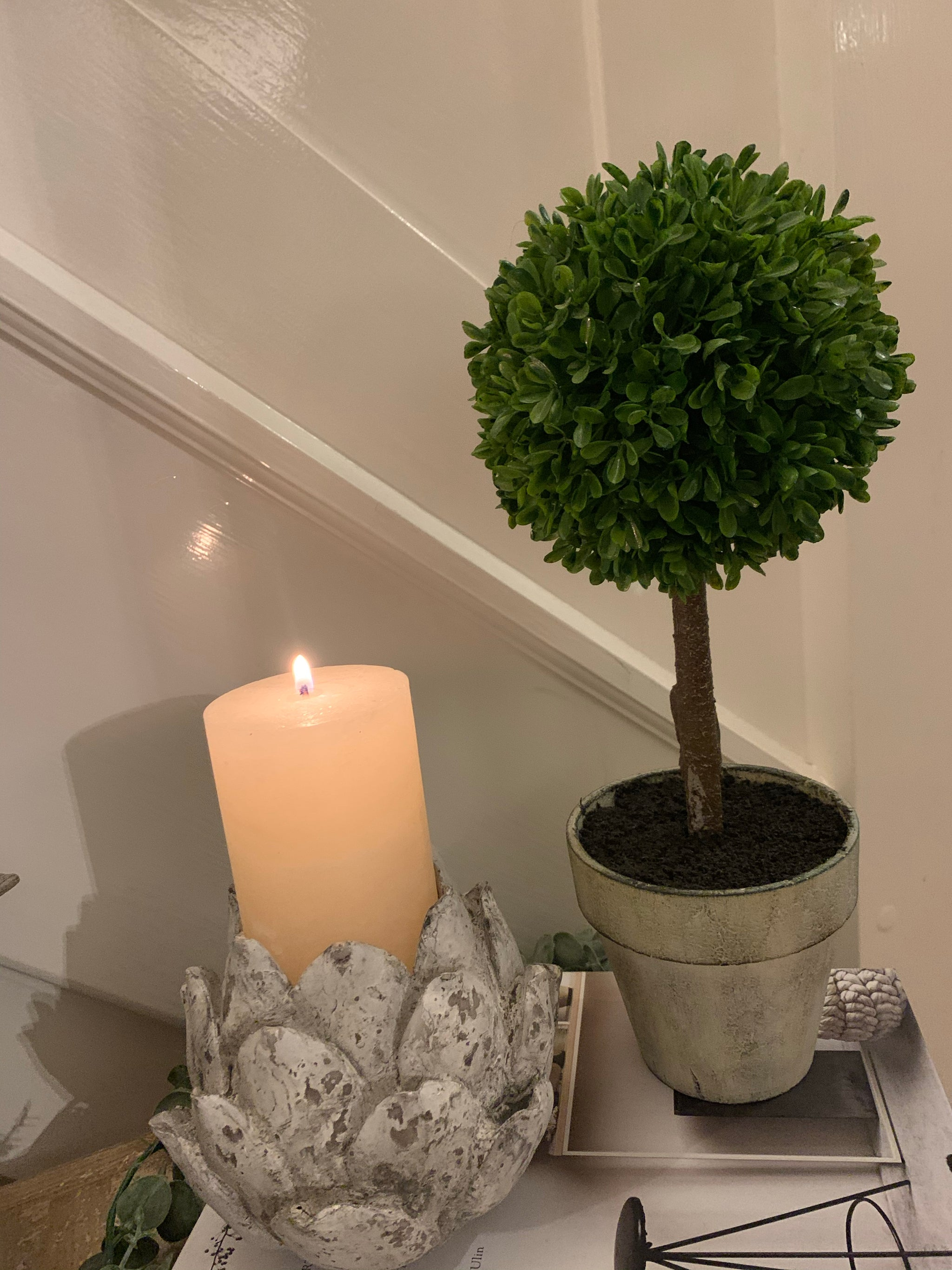 Potted boxwood tree