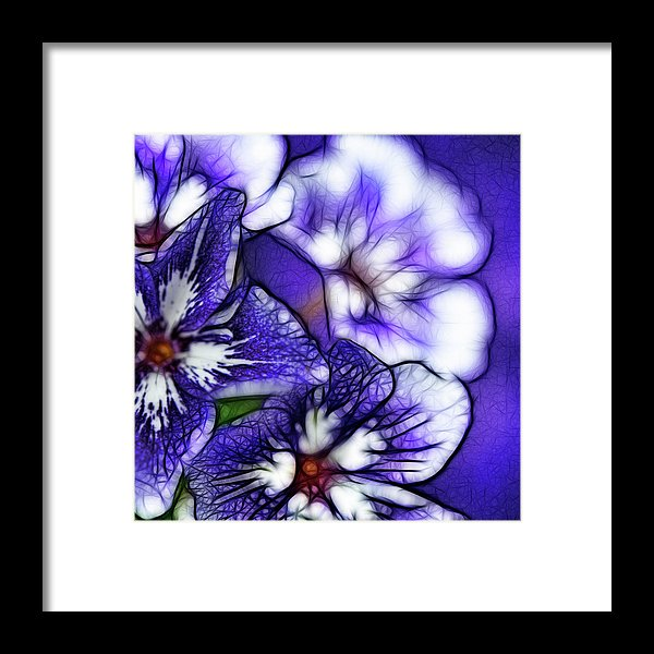 Purple And White Flowers - Framed Print