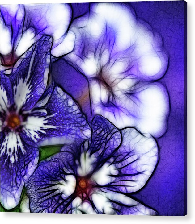 Purple And White Flowers - Acrylic Print