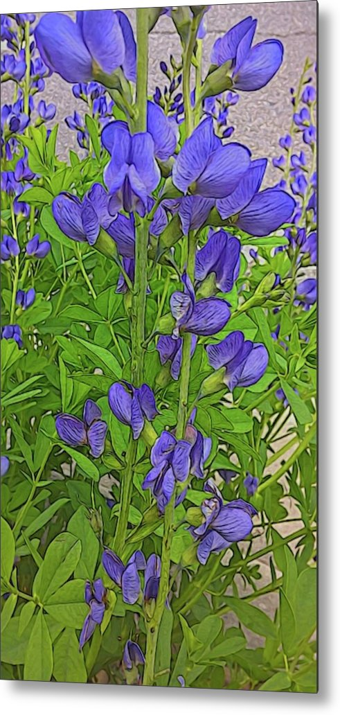Purple Flowers - Metal Print