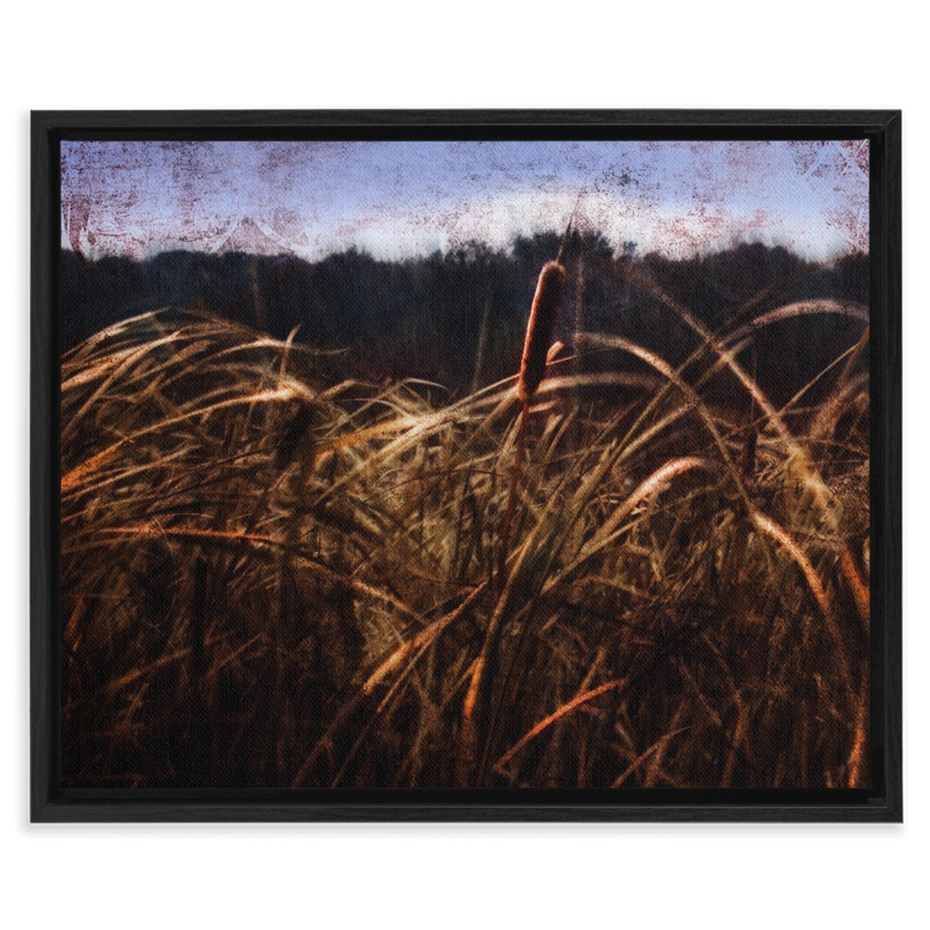 Cattails In The Wind Framed Canvas Wraps