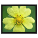 Yellow Wildflower Detail Framed Canvas Wraps